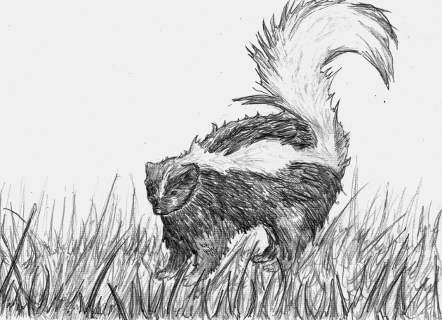 Skunk - An animal commission